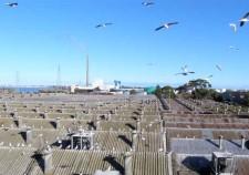 roof_seagulls